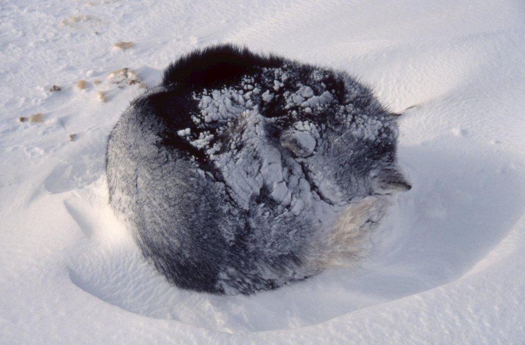 La chienne Muguarri après une nuit de tempête. 29 avril 2003.