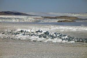 Le front du glacier Steenstrup sort de la brume. La largeur du glacier atteint 35km. 7 août 2014.