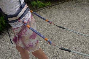 Photo montrant le détail du système de sandows intercalés entre le harnais (à G) et le timon de la pulka (à D).