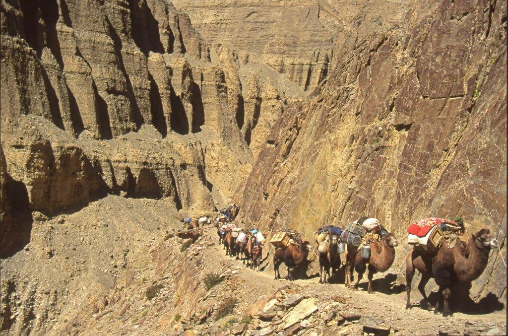 La caravane des chameaux dans les gorges de la rivière Surukwat. 15 septembre 1993.