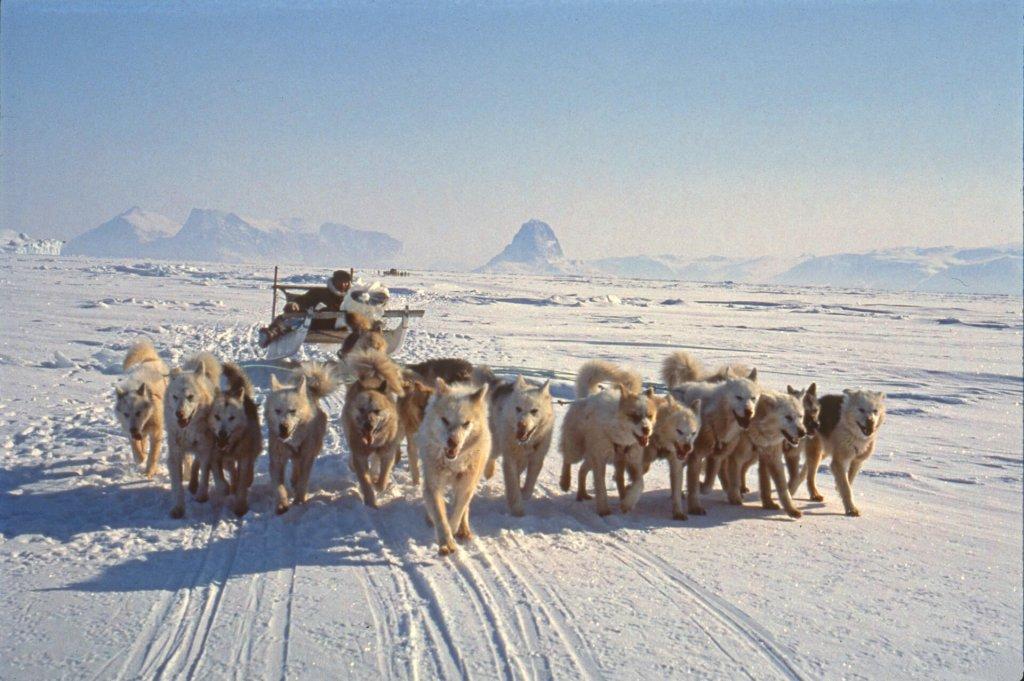 Voyage en traîneau à chiens. On distingue au fond l'aiguille rocheuse dominant le village d'Uummannaq. 9 avril 1991.