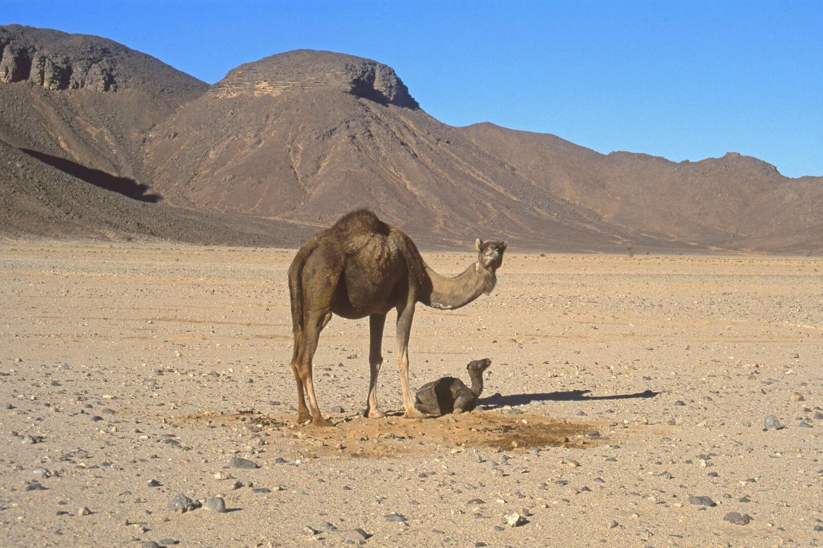 Accouchement dans le désert