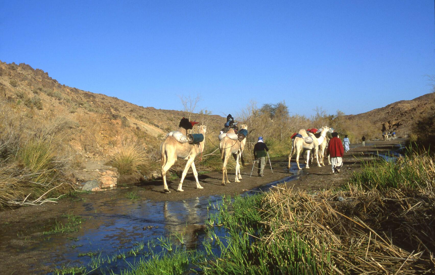Oued dans la Tefedest