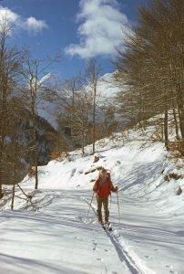 Dans le bois d'Espelunguère en vallée d'Aspe - Janvier 1977.