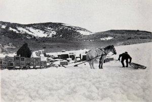 Un poney tracte un chargement depuis le Nimrod jusqu'à la hutte de l'expédition.