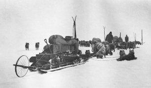Les Norvégiens en route vers le Pôle. Noter les 5 paires de skis, les chiens, les traîneaux chargés, les roues pour mesurer la distance parcourue. Novembre 1911.