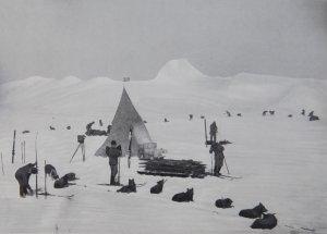 Le premier camp des chiens à Framheim - Février 1911.